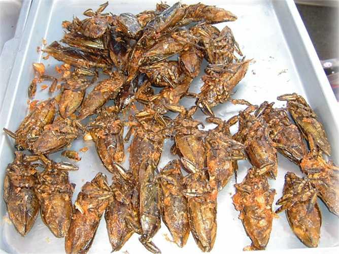 1. Cà cuống. Loài côn trùng nổi tiếng với lớp vỏ khá cứng vì vậy khi muốn thưởng thức chúng,  mọi người phải tách bỏ vỏ và rán. Đặc biệt, cà cuống THái Lan được coi là một món ăn vô cùng bổ dưỡng