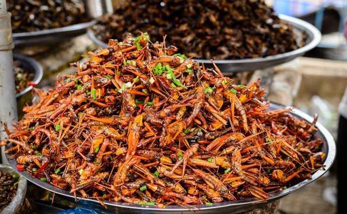 3. Cào cào. Một loài vật khá quen thuộc ở Việt Nam. Tại nhiều quốc gia châu Á, cào cào được cho là côn trùng có hại và người ta 'giải quyết' nó bằng cách: xào, rán, hầm, nướng hoặc tẩm bột chiên