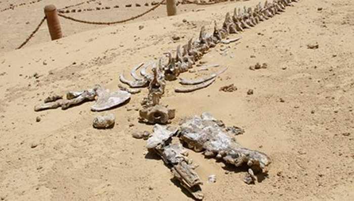 Ít ai ngờ rằng di chỉ về xương sinh vật biển được bảo tồn tốt nhất thế giới lại nằm giữa một sa mạc hoang vắng ở châu Phi.
