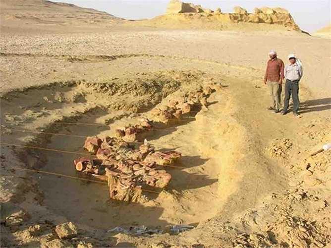 Những hóa thạch sinh vật biển tại đây đã giúp các nhà khoa học lý giải được một trong những bí ẩn lớn nhất trong quá trình tiến hóa và phát triển của loài cá voi.