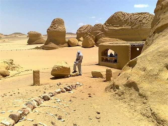Bên cạnh hóa thạch cá voi, hóa thạch của các loài động vật khác như cá mập, cá sấu, rùa… được tìm thấy ở Wadi Al-Hitan đã giúp các nhà khảo cổ tái tạo được điều kiện môi trường sinh thái xung quanh khu vực từ hàng triệu năm trước.