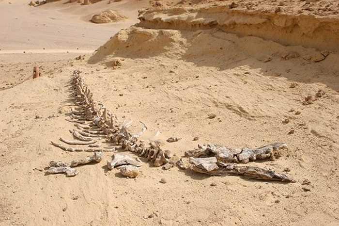 Khi hồ cạn các sinh vật trong ở nơi đây đã chết và trở thành hóa thạch sau một quá trình biến đổi địa chất lâu dài. Vào năm 1800, cuộc khai quật và nghiên cứu đầu tiên được thực hiện tại thung lũng này nhưng phải đến tận năm 1830 bộ xương đầu tiên mới được tìm thấy.