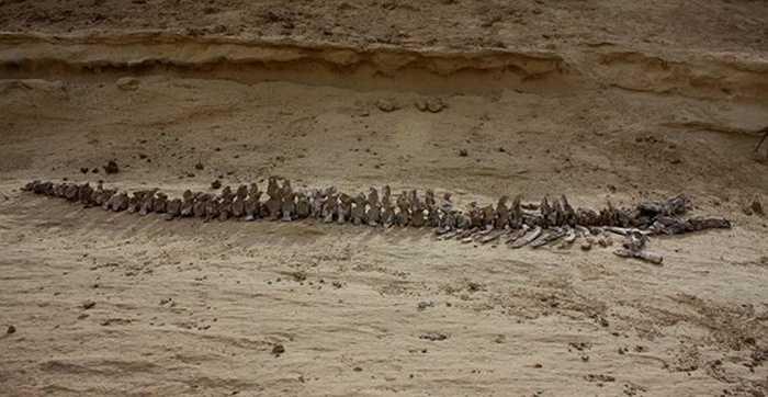Kể từ đó, các cuộc khai quật và tìm kiếm trong một vùng thung lũng rộng lớn đã được tiến hành, làm phát lộ hàng trăm bộ xương quý giá. Vào năm 2005, UNESCO đã công nhận Thung lũng cá voi của Ai Cập là Di sản thiên nhiên thế giới.