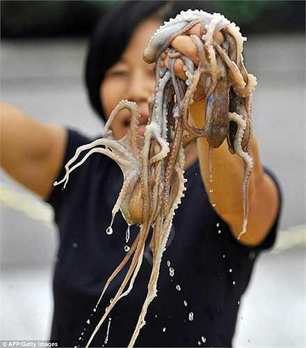 Bạch tuộc sống hay còn gọi là Sannakji là một món ăn truyền thống kinh dị của xứ sở kim chi.