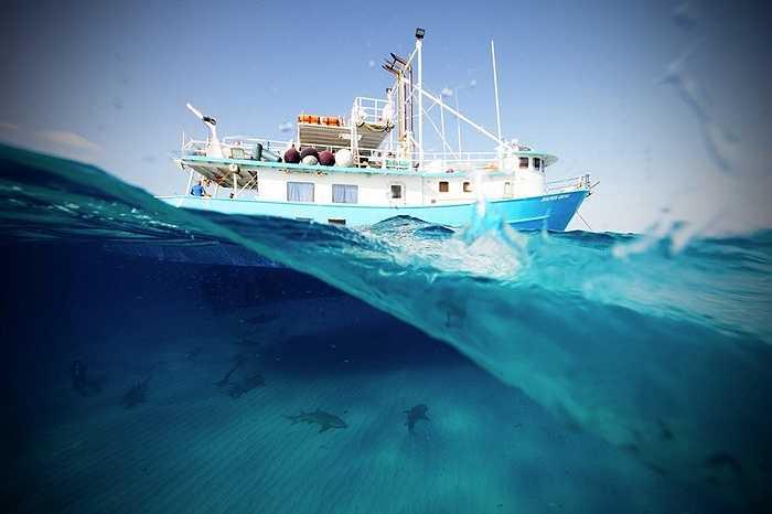 Đàn cá heo chơi đùa dưới thân tàu