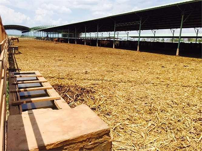 Trại bò thịt ở Attapeu (Lào) là 1 trong nhiều trại bò được bầu Đức xây dựng tại Lào.