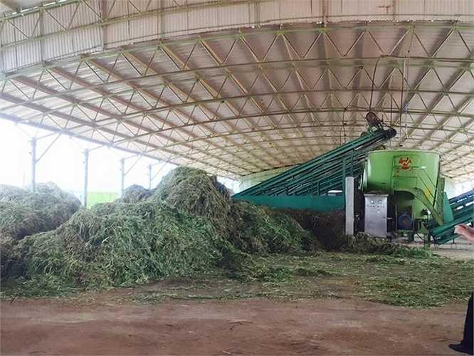 Sau khi cỏ đã băm sẽ được đưa vào máy trộn thức ăn tự động trộn cùng khoai mỳ (sắn củ), bột bắp, bã đậu nành, urê, muối, rỉ mật