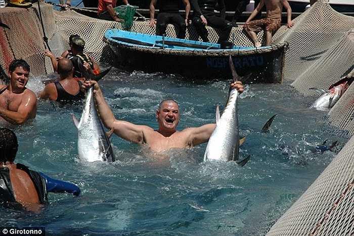 Lễ hội săn cá ngừ đặc biệt này có tên Girotonno