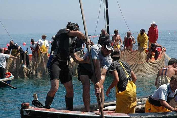 Ngư dân dùng thuyền nhỏ lao vào bầy cá