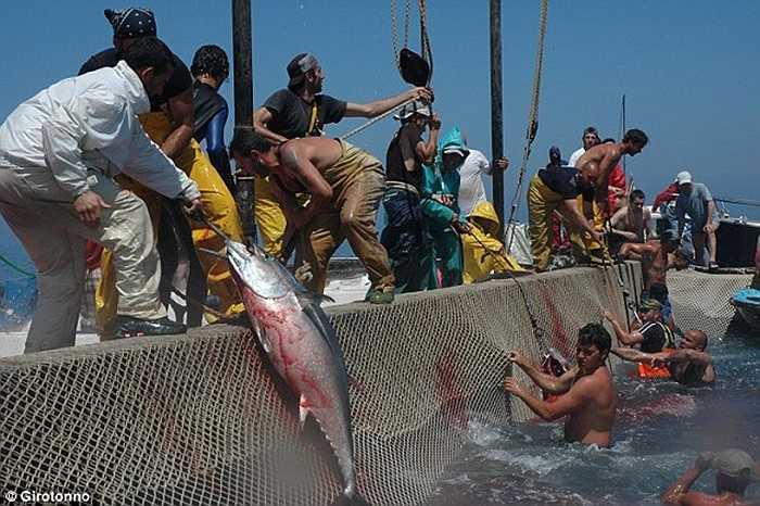 Kỹ năng giết cá sẽ là tiêu chí đánh giá của các ngư dân