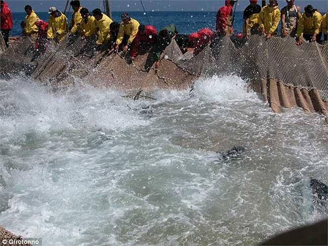 Dùng lưới bao vây đàn cá
