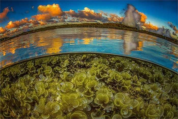 Khu vực chụp là vùng biển gần đảo Bonaire, được mệnh danh là thiên đường của thợ lặn. Với nước trong xanh, mây vàng và dưới nước là rặng san hô có hình dáng lạ lùng