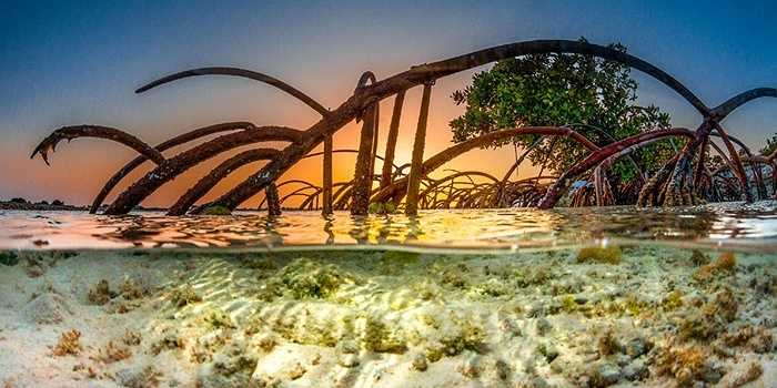 Vùng nước nông với những cây khô mọc ven biển, cát trắng thấy tận đáy nhờ nước trong vắt