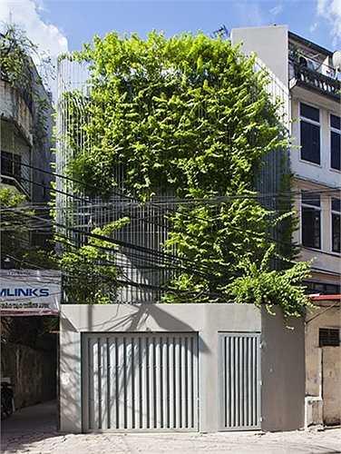Không chỉ đơn thuần sử dụng các vật liệu để thiết kế lam chống nắng, các kiến trúc sư còn tạo thêm cảnh quan cho hệ lam bên ngoài ngôi nhà bằng những giàn dây leo, cây xanh mướt mắt.