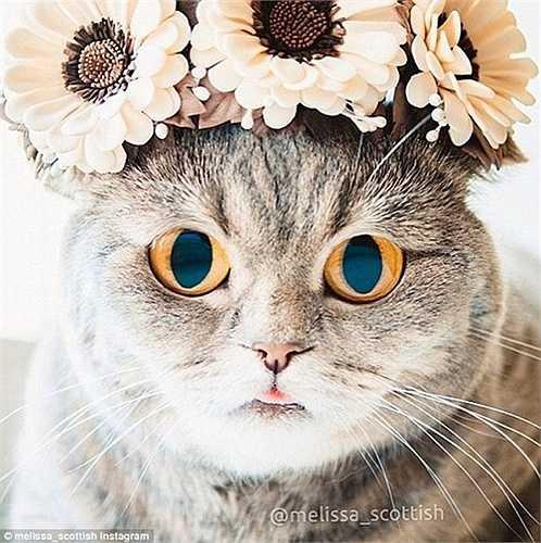 Hay đeo vòng hoa cúc rất đáng yêu