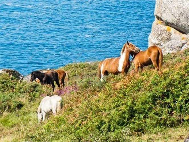 Đam mê cưỡi ngựa, tỷ phú Ortega sở hữu một trường đua ở Finisterre, Galicia, Tây Ban Nha.