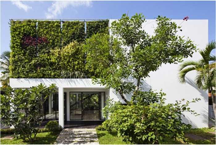 Một biện pháp hữu hiệu chống nắng cho tường được yêu thích là trồng dây leo, cây xanh leo bám lên tường. Tuy nhiên, cách làm này cần nhiều thời gian.