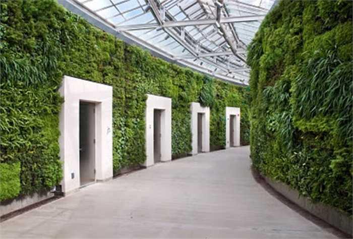 Các loại cây chọn trồng trên tường phải phù hợp với điều kiện sống trong nhà.