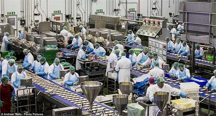 Nhà máy sản xuất bánh sandwich lớn nhất của Anh là Greencore nằm ở Worksop, Nottinghamshire. Ở đây cho ra lò 30.000 chiếc bánh mỗi tuần