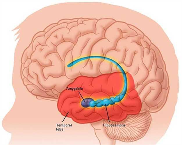 Viêm não: Bệnh thường để lại các di chứng trầm trọng và có tỷ lệ tử vong cao, có thể bùng phát thành dịch, do virus lây truyền chủ yếu qua đường muỗi Culex.