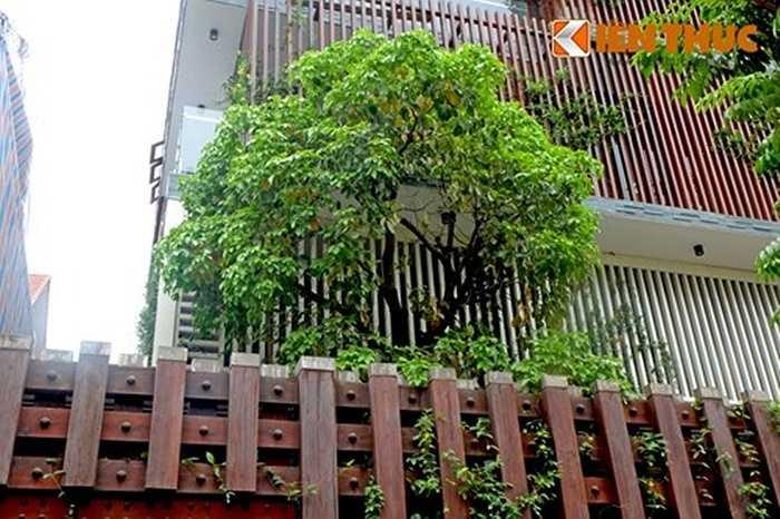 Dây leo lên hàng rào và lam chắn nắng, cây xanh được trồng trong sân, tạo cảnh quan đẹp mắt, giải nhiệt cho biệt thự ngày nắng nóng.