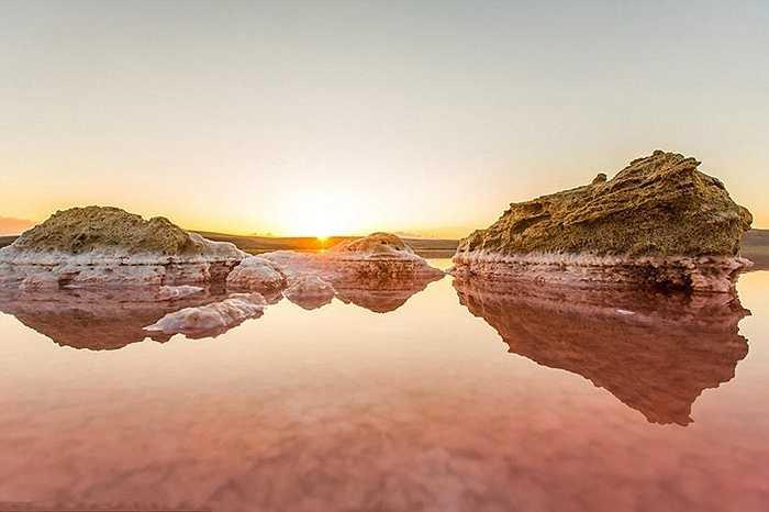 Chim hồng hạc là loài vật đặc trưng của hồ. Thức ăn của chúng là vi khuẩn kéo về hồ do bị hấp dẫn bởi mỏ khoáng sản và kali bao phủ hồ