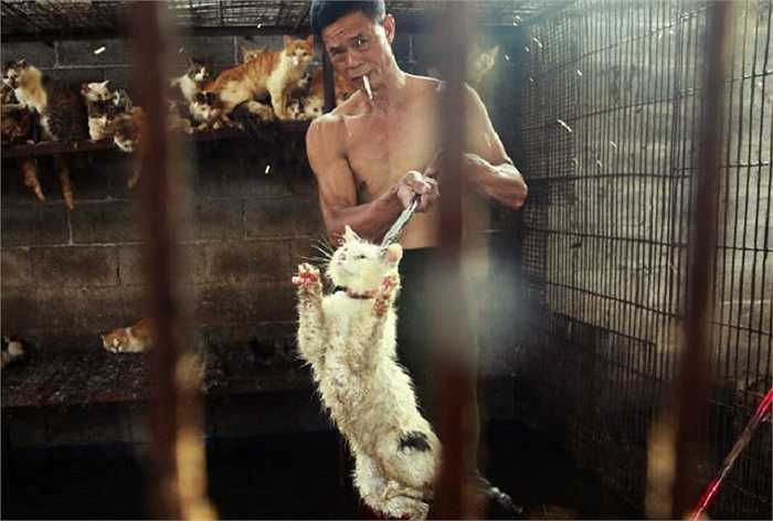 Hàng ngàn chó mèo đã bị bắt trộm để tập trung phục vụ cho lễ hội thịt chó mèo