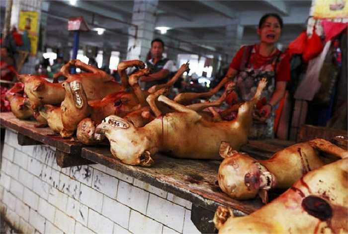 Những con chó bị giết thịt để phục vụ lễ hội