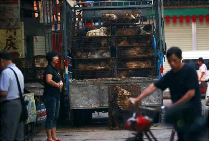 Lái buôn từ khắp các vùng tập trung cung cấp động vật sống cho các đầu mối tại thành phố Ngọc Lâm
