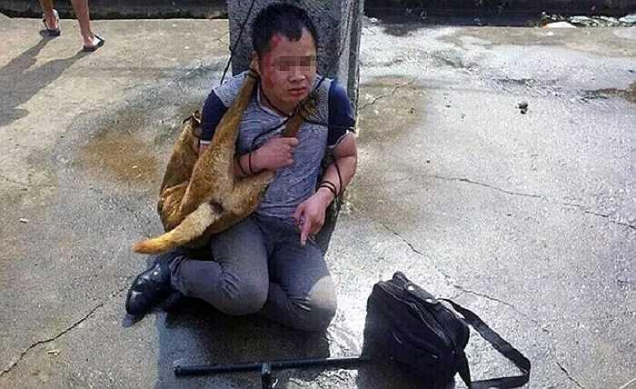 Hàng ngàn chó mèo cũng đã bị bắt trộm để tập trung phục vụ cho lễ hội này. Mới đây, hai tên trộm chó bị bắt quả tang