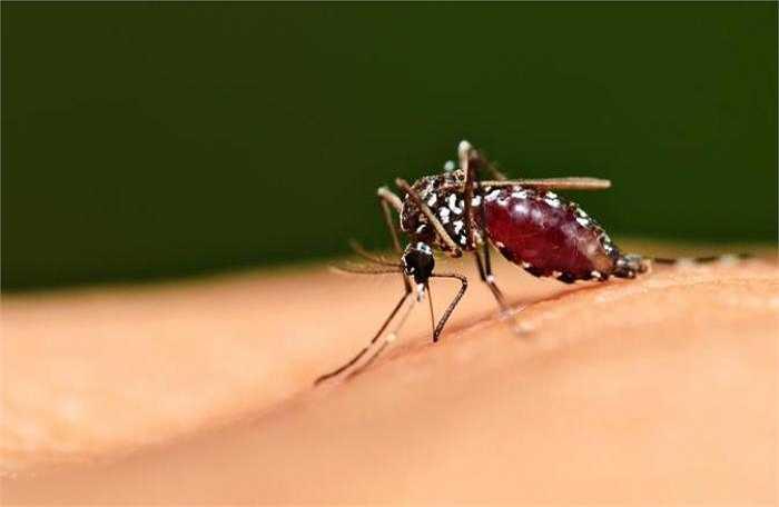 Bước vào hè, thời tiết nắng nóng cùng khí hậu thay đổi bất thường là nguy cơ gia tăng các bệnh truyền nhiễm do muỗi đốt như sốt rét, sốt xuất huyết, Viêm não Nhật Bản...