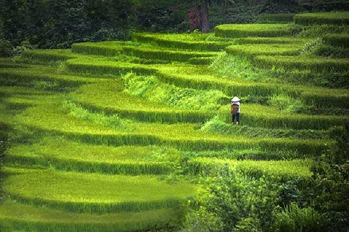 Những bức ảnh về đất nước, con người Việt Nam mà Stephen Wallace chụp được đăng tải trên trang Huffington Post