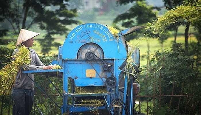Nông dân thu hoạch lúa, hình ảnh quá đỗi quen thuộc đối với con người Việt Nam, hiện lên dưới ống kính du khách Mỹ