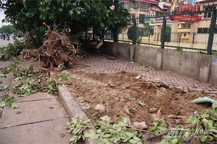 Cây cối bị lật gốc khiến vỉa hè bị biến thành đống đổ nát (Tùng Đinh/Thực hiện)