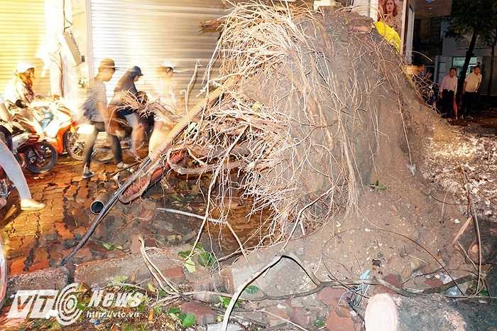 Toàn bộ gốc cây đã bị 'nhấc bổng' lên và tạo thành một hố lớn trên vỉa hè. Toàn bộ khu vực đầu Phố Huế bị mất điện.