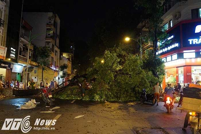 Con đường Phố Huế xinh đẹp của Thủ đô Hà Nội là con đường có nhiều cây cổ thụ 'hy sinh' nhất trong cơn giông ngày 13/6.