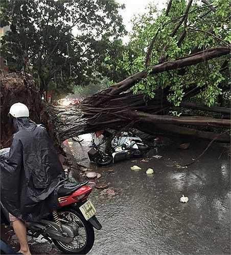Nhiều người khác bị cây đổ đè trúng dẫn đến thương vong