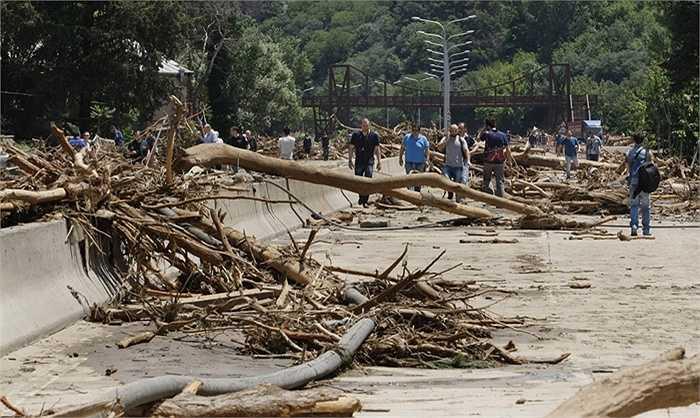 Đường phố tràn ngập thân cây