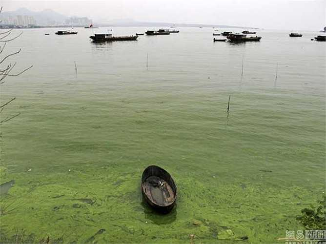 Tảo xanh xâm chiếm vùng nước ven bờ
