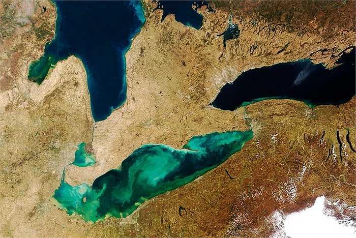 Một hồ nước đang dần bị tảo chiếm đóng