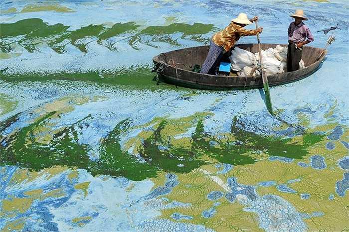 Người dân Trung Quốc thả hóa chất diệt tảo
