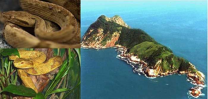 Đảo rắn. Hòn đảo rắn rộng lớn này là nơi sinh sống của rất nhiều loài rắn độc và khiến người dân phải hết sức cẩn thận. Phần lớn cư dân đã di chuyển tới một địa điểm thay vì ở lại đối mặt với nguy cơ chết người hàng ngày hàng giờ