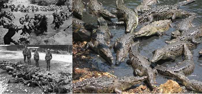 Đảo Ramree. Trên hòn đảo này có rất nhiều đầm lầy với nhiều loại cá sấu nước mặn khổng lồ vô cùng hung hăng và luôn sẵn sàng tấn công bất kỳ người dân xấu số nào đến đây. Vào năm 1945, hơn 1000 quân Nhật đã rút lui tới đây khi bị quân đồng minh đàn áp và bị cá sấu tấn công