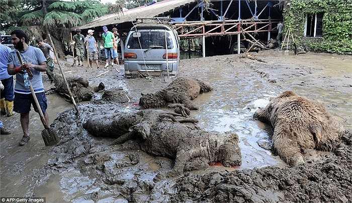 Xác hổ, gấu, sư tử nằm la liệt trên bùn đất khiến người ta liên tưởng đến cảnh trong phim thảm hoạ của Hollywood
