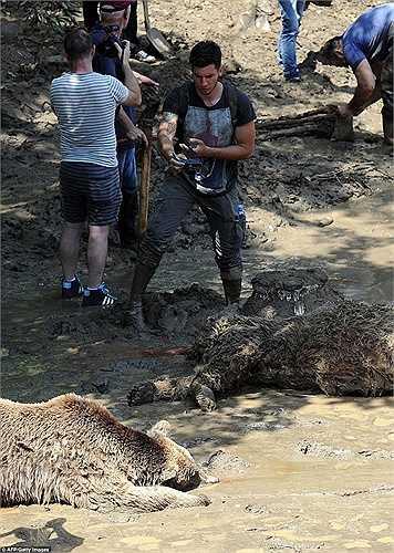 Người đàn ông chụp ảnh con gấu đã chết nằm trên bùn đất