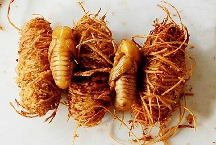 Chúng thường sống trên ngọn dừa. Dù đuông đục khoét làm hỏng dừa nhưng đuông dừa ăn rất ngon, lại bán được giá nên đuông là đặc sản độc đáo có một không hai ở những xứ dừa đồng bằng sông Cửu Long. Giá đuông dừa dao động từ 10.000 - 20.000 đồng/con.