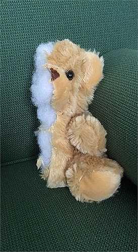 Nửa con gấu bông teddy