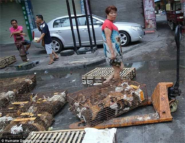 Mặc dù các nhà chức trách đã có lời cam kết lễ hội này sẽ bị xoá bỏ nhưng người dân vẫn nườm nượp xếp hàng mua thịt chó vào ngày này