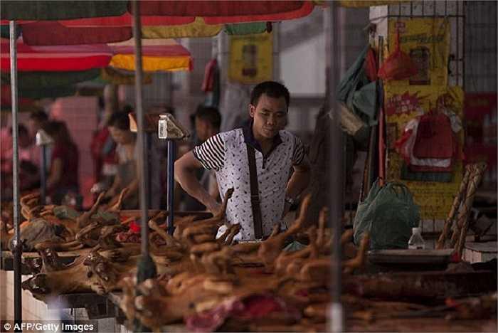 Việc ăn thịt chó không bị cấm ở Trung Quốc nhưng tất cả số chó, mèo được chuyển đến Ngọc  Lâm phải có chứng nhận kiểm dịch