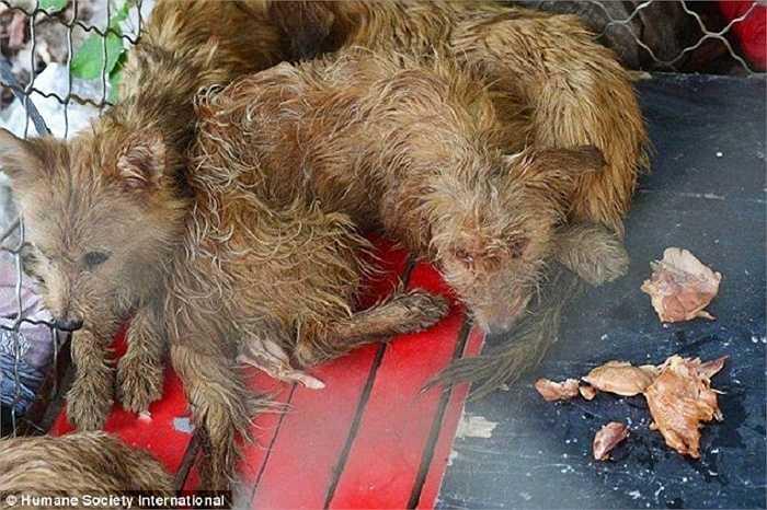 Nhưng nhiều thương buôn không thể chứng minh được nguồn gốc các con vật mà họ mang đến